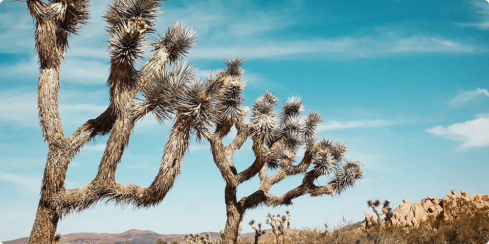 Desert plants in front of the sky as patients receive dual diagnosis treatment at The Hope House