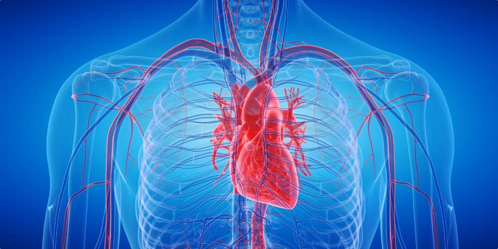 Image Of Heart Damage From The Long Term Physical Effects Of Alcohol Abuse